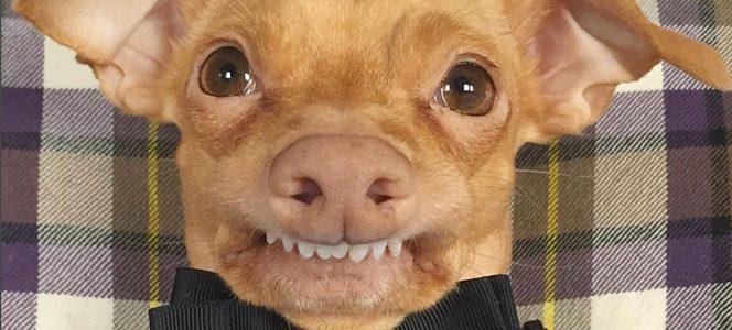 """Conoce a la perrita que fue llamada como """"La más fea del mundo"""""""