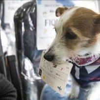 En Japan Airlines te permiten viajar con mascotas en cabina