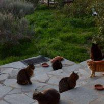 Foto: Los gatos en el santuario felino de Siros en Grecia