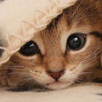 Ver videos de gatitos es bueno para la salud