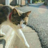 Gatos-animales-ambiente-respeto-transito-este-oficial-de-transito-ayuda-gato-cruzar-la-calle