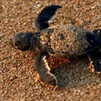 una-mujer-resulto-con-una-tortuga-en-sus-partes-intimas
