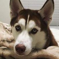 veterinaria-confiesa-que-es-lo-ultimo-que-hacen-los-perritos-antes-de-morir