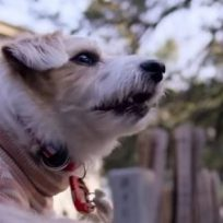dogs-sera-la-nueva-serie-documental-de-neflix