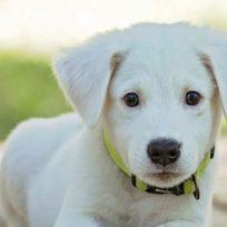 hermosa-perra-ciega-y-sorda-reconoce-su-dueno