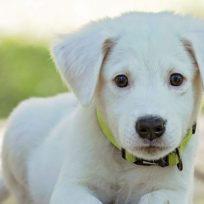 pasar-mucho-tiempo-en-el-celular-podria-danar-la-relacion-con-tu-perro