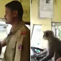 mico-maneja-bus-con-pasajeros-bordo