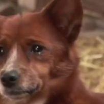 perrito-llora-desconsolado-cuando-le-quitan-lo-que-mas-ama-en-la-vida