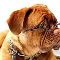 crean-emisora-de-radio-para-los-perros-que-quedan-solos-en-casa