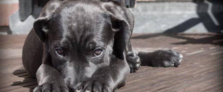 perro-pide-que-le-curen-la-pata-en-una-farmacia
