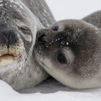 salvo-una-foca-luego-de-retirarle-una-basura-de-su-cuello