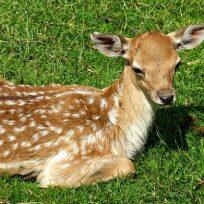 cazador-de-ciervos-es-condenado-ver-bambi-una-vez-al-mes
