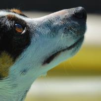 recolectores-rescatan-un-perrito-de-la-basura
