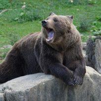 oso-cuida-un-nino-en-un-bosque-durante-dos-dias