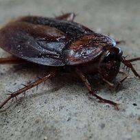desquitate-con-tu-ex-bautizando-una-cucaracha-con-su-nombre