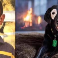 Niño supera la depresión gracias a un perro con su misma condición