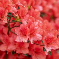 exportaron-35-mil-toneladas-de-flores-ee-uu-por-san-valentin