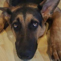 el-truco-para-que-tu-perro-no-se-asuste-con-la-polvora-o-los-truenos