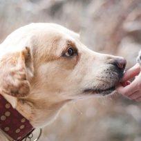 los-perros-detectan-las-personas-con-malas-intenciones