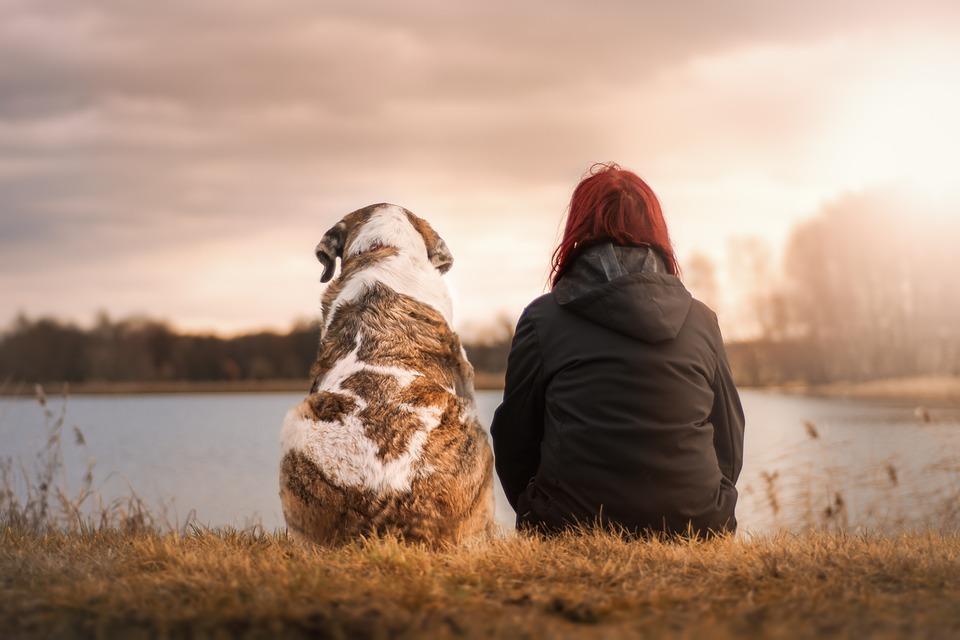 Los perros detectan a las personas con malas intenciones - Imagen 1