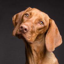 crean-emisora-especialmente-para-los-perros