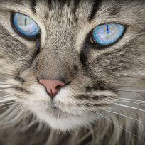 los-gatos-son-el-unico-animal-que-ha-crecido-desde-que-fue-domesticado