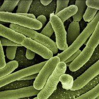 identifican-los-parasitos-que-danan-el-platano-y-el-banano