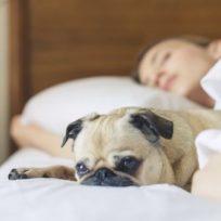 el-secreto-nocturno-de-los-perros-por-que-es-bueno-dormir-con-mascotas
