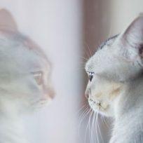 mirada-de-gato-reflejada-en-dos-espejos-diferentes-impresiona-en-redes