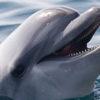 increible-se-le-cayo-el-celular-al-mar-y-delfin-se-lo-devuelve-en-la-mano