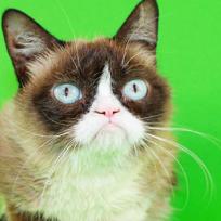 Muere la gatica más famosa de las redes