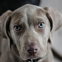 sabias-que-tener-un-perro-ayuda-tener-el-corazon-sano