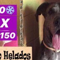 lancer-el-perrito-que-vende-helados-para-paga-tratamiento-contra-el-cancer