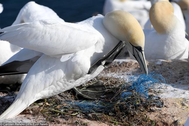 En Imágenes: Así va el planeta en materia de contaminación ambiental - Imagen 4