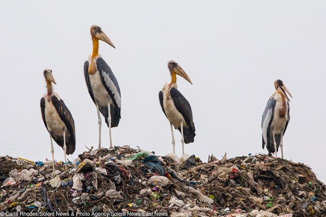 En Imágenes: Así va el planeta en materia de contaminación ambiental - Imagen 13