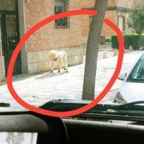 Hombre en España se disfrazó de perro para poder salir a la calle