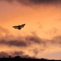 En Perú prenden fuego a murciélagos por miedo a coronavirus