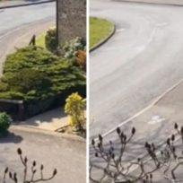 Hombre se disfrazó de árbol para poder salir de su casa durante la cuarentena