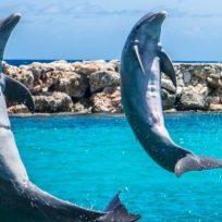 Gracias a la cuarentena, un hombre pudo nadar con varios delfines