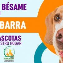 Mascotas Bésame: Tipos de mascotas de acuerdo a nuestro hogar
