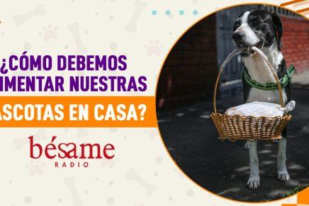 Mascotas Bésame: ¿Cómo preparar el alimento desde casa?
