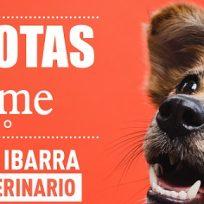 Mascotas Bésame: Situaciones que hacen que nuestras mascotas reaccionen de manera agresiva