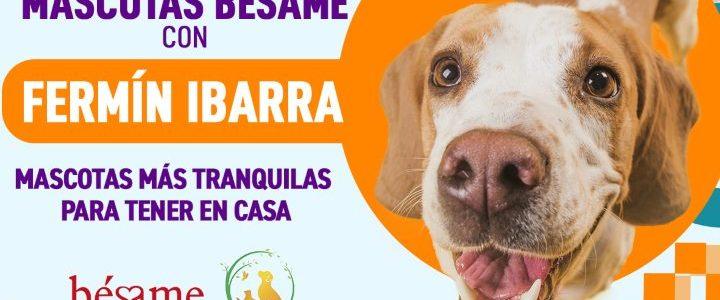 Mascotas Bésame: Mascotas más tranquilas para tener en casa