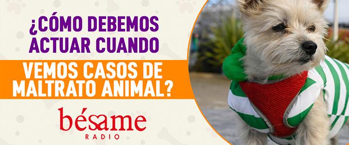 Mascotas Bésame: ¿Cómo debemos actuar cuando vemos casos de maltrato animal?